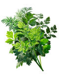 Herbs bouquet combination, paths Stock Images