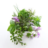 Herbs in a bowl and isolated Royalty Free Stock Photography