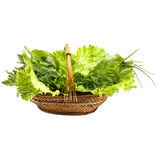 Herbs in a braided wooden basket on white background. Herbs in a braided wooden basket on the white background Royalty Free Stock Photos