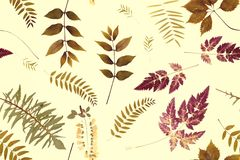 Herbs branch floral on yellow bacground pattern royalty free stock images