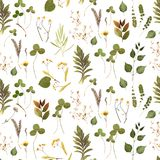 Herbs branch frame floral on white bacground royalty free stock images