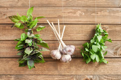 Herbs. Bunches of fresh bazil and garlic hanging on wooden wall, horizontal Stock Image