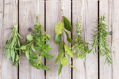 Herbs bunches Royalty Free Stock Photography
