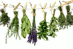 Herbs on clothes line