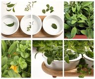 Herbs collage Royalty Free Stock Photos