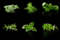 Herbs Collage on black background Stock Image