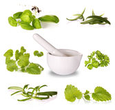 Herbs collection Royalty Free Stock Photos