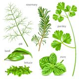 Herbs collection. Royalty Free Stock Image