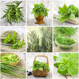 Herbs collection - collage. With nine pictures royalty free stock photo