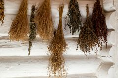Herbs Collection. Forest and wild herbs drying by on old farmhouse wall.flax, nettle and other.herbs aromatic royalty free stock images