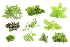 Herbs collection. Collection on herbs isolated on white background stock photos