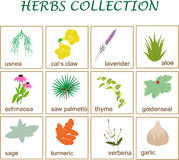 Herbs collection Royalty Free Stock Photography