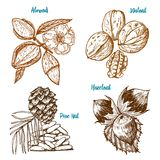 Herbs, condiments and spices. almond and walnut, pine nut and hazelnut, seeds for the menu. Organic plants or vegetarian. Vegetables. engraved hand drawn in old Royalty Free Stock Photo