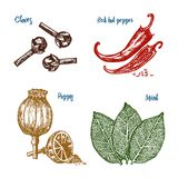 Herbs, condiments and spices. Red pepper, poppy and mint and cloves for the menu. Organic plants or vegetarian. Vegetables for cooking. engraved hand drawn in Royalty Free Stock Photography