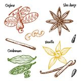 Herbs, condiments and spices. Vanilla and cinnamon, cashew. And cardamom, seeds and star anise for the menu. Organic plants or vegetarian vegetables. engraved Stock Photos