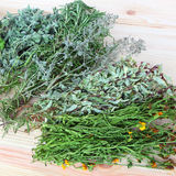 Herbs for cooking. Assorted fresh spices and herbs for cooking on the wood Royalty Free Stock Images