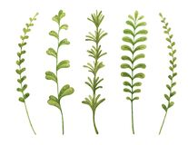 Herbs cooking rosemary, thyme, tarragon, mint, basil. Greenery watercolor sketch hand drawn botanical clipart.