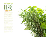Herbs with copyspace Stock Images
