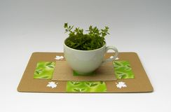 Herbs in the cup. Green herbs (oregano)(Origanum vulgare L.) in the cup with art paper underlay on the gradient background isolated Royalty Free Stock Photo