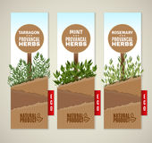 Herbs de Provence banners Stock Image
