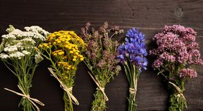 Herbs. Different types of fresh herbs on a wooden table stock images
