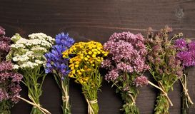 Herbs. Different types of fresh herbs on a wooden table stock photography