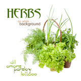 Herbs: dill, parsley, lettuce, onions Royalty Free Stock Photo