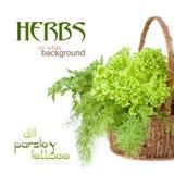 Herbs: dill, parsley, lettuce Stock Photo