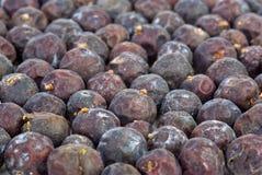 Herbs: Dried high juniper berries Stock Image