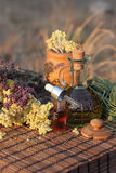 Herbs and essential oil Stock Photography