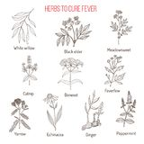 Herbs for fever cure. Hand drawn vector illustration Stock Photos