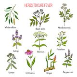 Herbs for fever cure. Hand drawn vector illustration Stock Photography