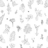 Herbs flower graphic seamless pattern drawn graphic texture background, sketch for wallpaper, textile, design packaging. Herbs flower graphic seamless pattern Stock Photos