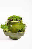 Herbs in flowerpot. Photo of herbs in pot on white background royalty free stock photography