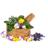 Herbs and Flowers Stock Photo