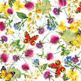 Herbs and flowers with butterfly background. watercolor illustration Stock Photos