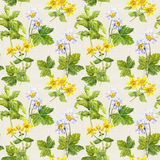 Herbs, flowers: camomile, hypericum. Herbal seamless print. Floral watercolor Stock Image