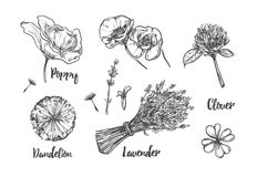 Herbs and flowers collection. Vector hand drawn. Royalty Free Stock Images