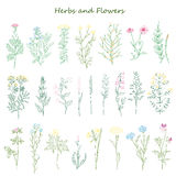 Herbs and flowers Stock Images