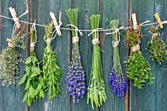 Herbs and flowers hanging out to dry Royalty Free Stock Image