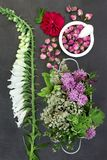 Herbs and Flowers for Herbal Medicine stock images