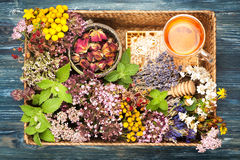Herbs and flowers, honey and herbal tea Royalty Free Stock Image