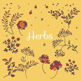 Herbs and flowers set. Hand drawn plants. Vector botanical illus Royalty Free Stock Photo
