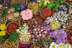Herbal Medicine Background. Herbs and flowers used in herbal medicine and Chinese and natural homoeopathic remedies background Stock Images