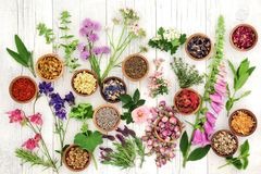 Herbs and Flowers for Herbal Medicine royalty free stock images