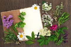 Free Herbs For Herbal Medicine Stock Image - 107634231
