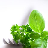 Herbs and fork royalty free stock images