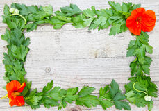 Herbs form a frame on wood Royalty Free Stock Photos