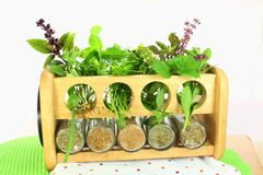 Herbs fresh and dry Stock Image