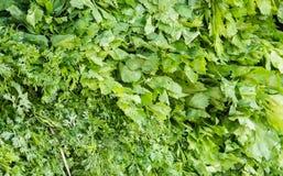 Herbs full frame Stock Images
